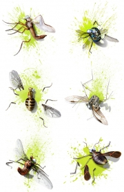 Rick-Jacobson-Squished-Bugs