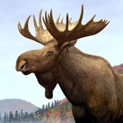 Ron-Dollekamp-CanPass-Moose