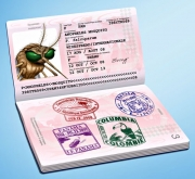 Ron-Dollekamp-MalaroneMosquito-Passport-